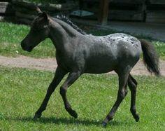 http://www.crittercreek.com/crittercreeknew/foals2008/IMAG023.JPG
