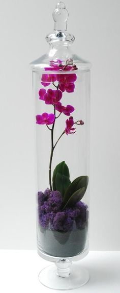 orchid in a jar. I used a fake orchid and purple sand but for the same effect. It's been my prettiest apothecary jar filler yet. Very striking.: