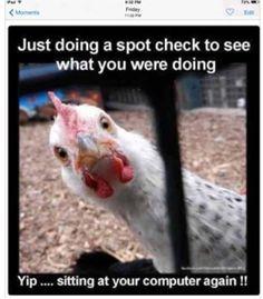 spot check