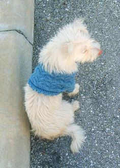 Cables & Bits Dog Sweater