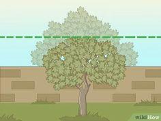 Een vijgenboom snoeien: 11 stappen (met afbeeldingen) - wikiHow
