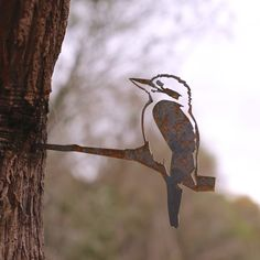 It turns out that the iconic laughing Kookaburra is the largest Kingfisher in the world. Theories abound but perhaps this is due in main to its aversion to the