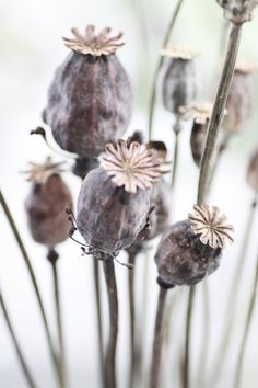 Flora - Seed Pods in Bouquet