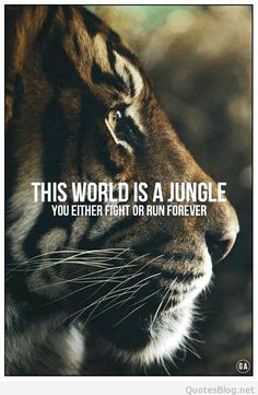 The world is a jungle