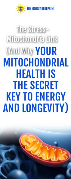 The Stress-Mitochondria Link (And Why Your Mitochondrial Health Is The Secret Key To Energy And Longevity) With Dr. Martin Picard, PhD - The Energy Blueprint Mitochondrial Dna, Systems Biology, Feeling Hungry, Cortisol, Neurology, Psychiatry, How To Increase Energy, Studying