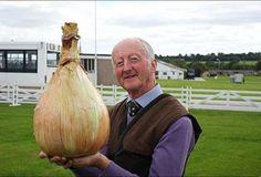 Gigantic_vegetables_onion
