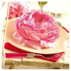Van Zyverden Peonies Set of 5 Roots - Dinnerplate Pink