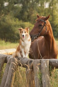 a horse and his dog :)