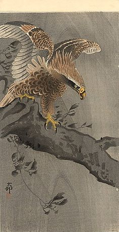 (Japan) Eagle by Koson Ohara Japanese Bird, Japanese Prints, Japanese Illustration, Illustration Art, Ohara Koson, Art Chinois, Eagle Art, Japan Painting, Japanese Tattoo Art