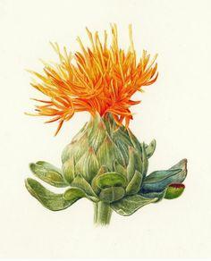 Folio illustration agency, London, UK | Slideshow: Nature & Botanical