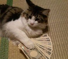 Money Images, Trust Love, Dollar Money, All Currency, Money Spells, Money Affirmations, Byron Bay, Animals And Pets, Cats