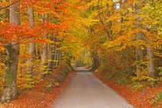Image result for beech tree autumn