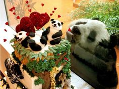 Happy Valentine's Day, r/aww! Here's an irresistable cake for you!