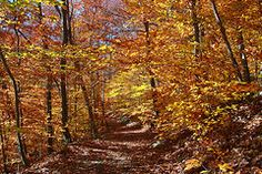 - A Path Through the Woods  by Allen Beatty