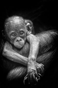 the cutest little baby... The Beginning by Philipp Birmes on 500px