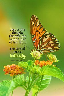 982 Best Butterflies Flowers Images Butterflies Flower Art