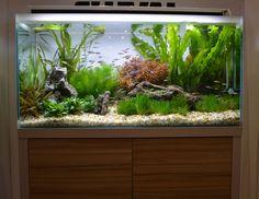 Fluval Unveils New Premium Freshwater Aquarium Series - reefs.com