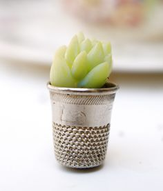 how to: fairy plant in a thimble