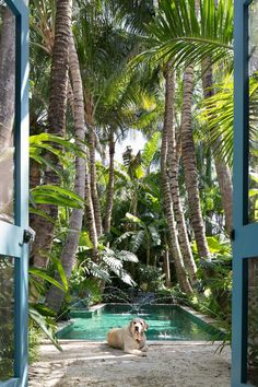Mirabellicious ♥: Palm Beach for Starters. 'Palm Beach Chic' by Jennifer Ash Rudick, photography by Jessica Klewicki Glynn, via The Palm Beacher. Tropical Pool Landscaping, Tropical Garden Design, Tropical Backyard, Backyard Pool Designs, Garden Landscaping, My Pool, Swimming Pools Backyard, Kleiner Pool Design, Outside Pool
