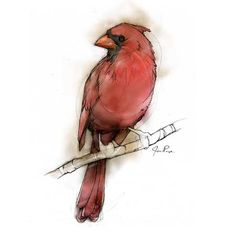[The Illustrator's Wife: BIRD ILLUSTRATIONS]