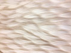Schwan Cream/White LONGPILE KUNSTPELZ Faux Fur Fake PELZ Plüsch FELLIMITAT FELL in Bastel- & Künstlerbedarf, Stoffe | eBay!