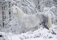 Horse - lovely image