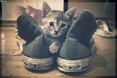 4 Teen //Official: Ilustrações para posts: Gatos