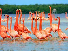 Download Wallpaper Flamingo - 1600x1200