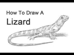 How To Draw A Lizard