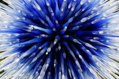Dale Chihuly Museum | Dale Chihuly brings new garden glass art show to Dallas Arboretum; OKC ...