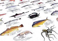South American Fish & Shellfish