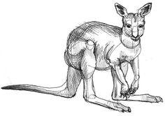 Art by Jeane Nevarez: kangaroos 2 Red Kangaroo, Kangaroos, Drawings, Artist, Animals, Animales, Animaux, Artists, Kangaroo