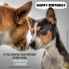 """If you counted your birthday in dog years, you'd now be a teenager! Happy Birthday."""
