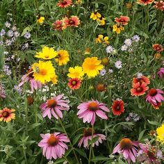 Sowing Wildflower Seeds To Create A Wildflower Garden, How-To Guide Meadow Flowers, Wild Flowers, Mustard Plant, Bee On Flower, Classic Garden, Wildflower Seeds, Wooden Garden, Flowers Perennials, Planting Seeds