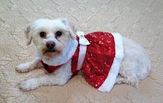 Dogs Luv Us and We Luv Them:A Puppy Can Be The Worst Holiday Gift