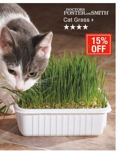 Drs. Foster & Smith Cat Grass - my cats eat it faster than I can grow it!