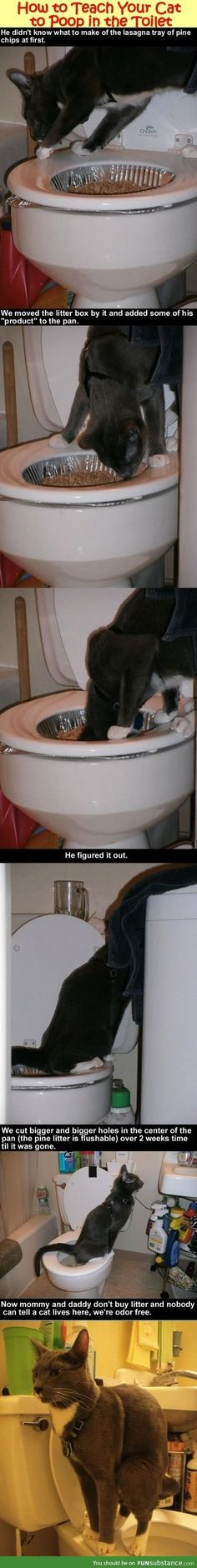 Teach a cat to poop in the toilet. I'm gonna have to try this with Sebastian.