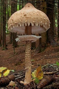 Giant Mushroom, Italy.
