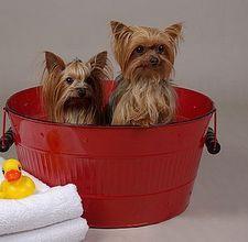Homemade doggy shampoo!