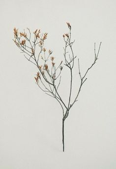 Гербарий от Jared Fowler, herbarium