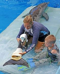 Clearwater Marine Aquarium trainer Cammie Zodrow puts a prosthetic tail on the aquarium's famous tail-less dolphin, Winter, while 8-ye...