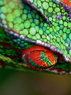 Chameleon didn't realize how vivid their colors could be.