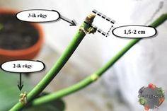 Mit kell tennünk amikor az orchidea elvirágzott, kezd elszáradni? Három féle alternatív megoldás létezik ennek a problémának a megoldására. Általában az orchidea hatalmas virágokkal kerül a lakásunkba, egy ideig élvezhetjük is ezt a látványt, de mit tegyünk akkor amikor kezd hanyatlani? Figyeljük meg alaposan a virágot és a növény szárán található rügyeket. Ha ezek a...Olvasd tovább