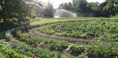 Ihr Bauerngarten, Berlin