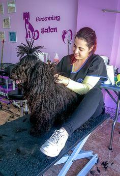 Definición de cordones de Brinco, raza húngara Puli. #Peluquería Canina Vivancos Dreadlocks, Hair Styles, Beauty, Lanyards, Hair Plait Styles, Hair Makeup, Hairdos, Haircut Styles, Dreads