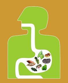 The 8-Ingredient Prescription for Radically Transformed Health : Underground Health Reporter