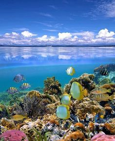 The country comprises an archipelago of more than 332 islands, of which 110 are permanently inhabited Dream Vacations, Vacation Spots, Great Barrier Reef Australia, Places To Travel, Places To See, Beautiful World, Beautiful Places, Beautiful Ocean, Fauna Marina