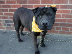Blankie RIP : (  3850 shares didn't save you, words didn't save you, likes didn't save you, wishes and prayers didn't save you, so sorry we couldn't save you.  Dumped by your owner in a kill shelter = murdered by your owner. GONE 3/10/14 Brooklyn Center, NY.   My name WAS BLANKIE. My crime? LIVING.  My Punishment? DEATH  ID # is A0992612.