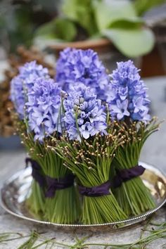 Hyacinth bouquet (diy pictures - centerpiece - can be repurposed as gifts for your guests) ~  Margit Engens: 'Christmas joy and sounds heavenly'