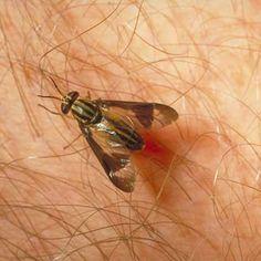 Repel Deerflies